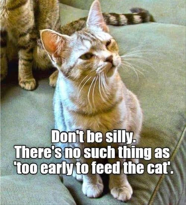 Cat - Don't be silly. There's no such thing as too early to feed the cat.