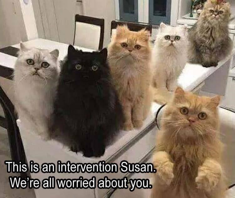 Cat - This is an intervention Susan. We're all worried about you.