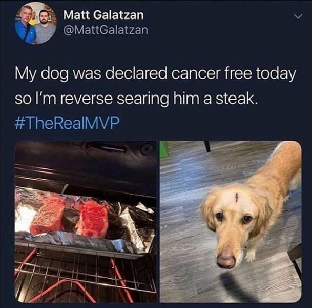 Dog - Matt Galatzan @MattGalatzan My dog was declared cancer free today so I'm reverse searing him a steak. #TheRealMVP