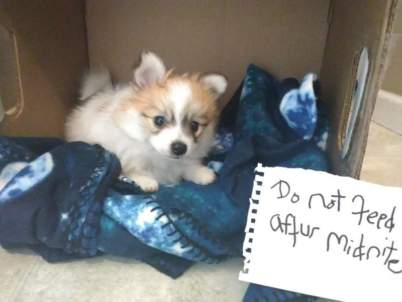 Dog - Do not Feed Ofur Micdrite