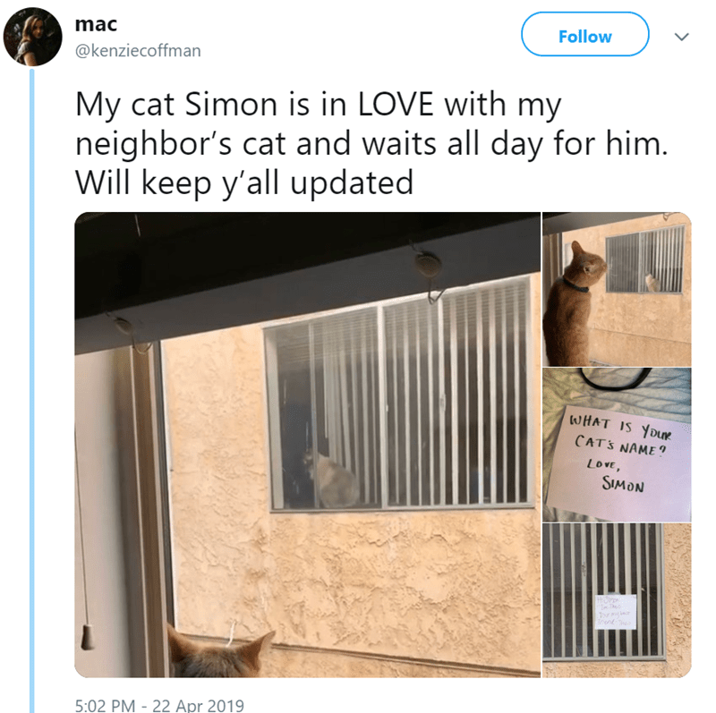 Product - Follow mac @kenziecoffman My cat Simon is in LOVE with my neighbor's cat and waits all day for him. Will keep y'all updated WHAT IS YOur CATS NAME? LOVE, SIMON 5:02 PM - 22 Apr 2019