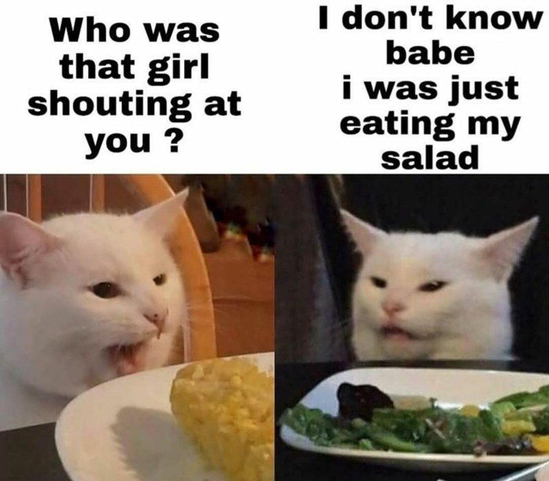 قطة - أنا لا أعرف حبيبي كنت آكل سلطتي فقط من كانت تلك الفتاة التي تصرخ فيك؟