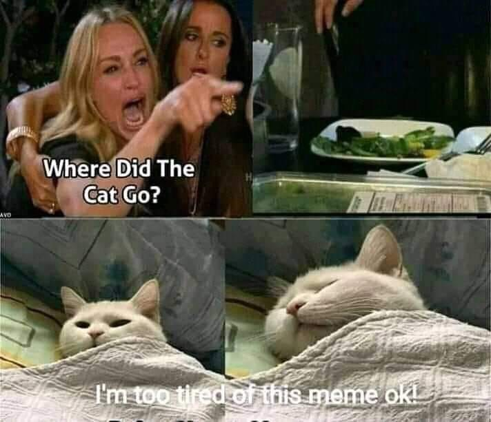 Photo caption - Where Did The Cat Go? AVD I'm too tired of this meme okL