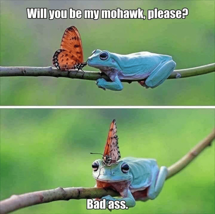 Adaptation - Will you be my mohawk, please?? Bad ass.