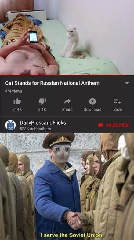 Human - Cat Stands for Russian National Anthem 4M views 214K 3.1K Share Download Save DailyPicksandFlicks SUBSCRIBE 528K subscribers I serve the Soviet Union it
