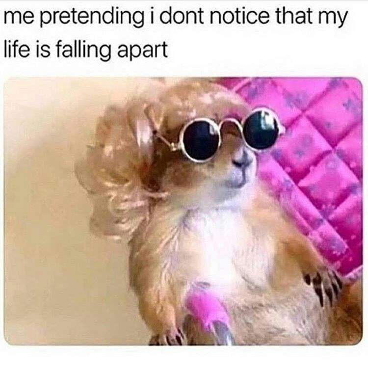 Dog - me pretendingi dont notice that my life is falling apart