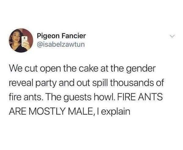 Text - Pigeon Fancier @isabelzawtun We cut open the cake at the gender reveal party and out spill thousands of fire ants. The guests howl. FIRE ANTS ARE MOSTLY MALE, I explain