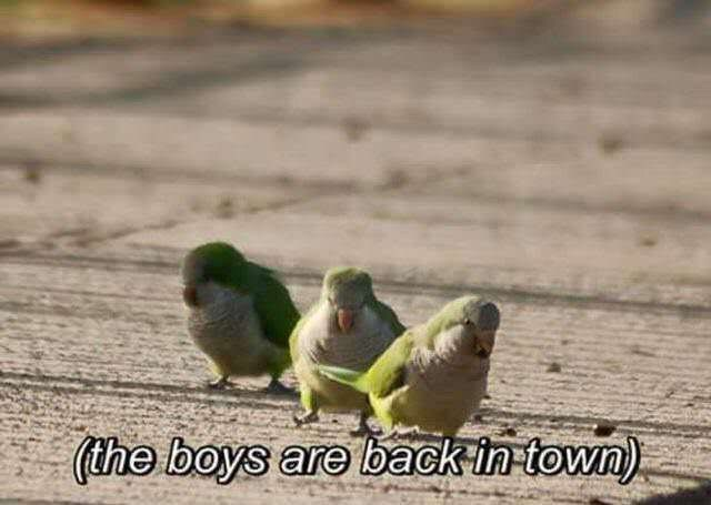 Bird - (the boys are back in-town)