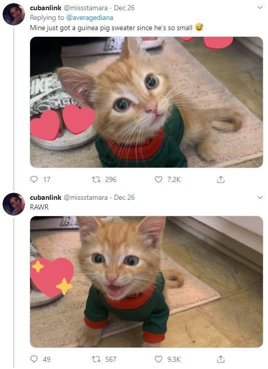 Cat - cubanlink @missstamara Dec 26 Replying to @averagediana Mine just got a guinea pig sweater since he's so small IKE O 17 23 296 7.2K cubanlink @missstamara Dec 26 RAWR 17 567 49 9.3K