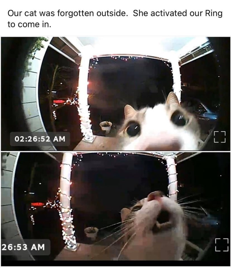 security camera footage of a cat on a porch: our cat was forgotten outside. she activated our ring to come in.