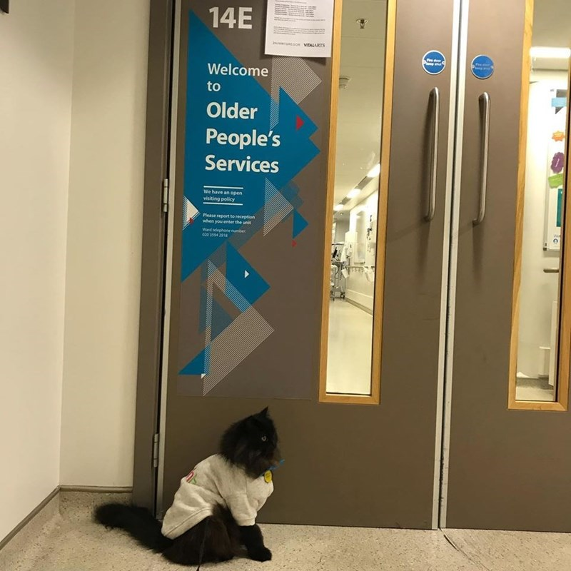 Door - 14E INAoEGOR VITALARTS Ps door Welcome to Older People's Services We have an open visiting policy Please report to reception when you enter the unit Wee Ward telephone number 020 3594 2918