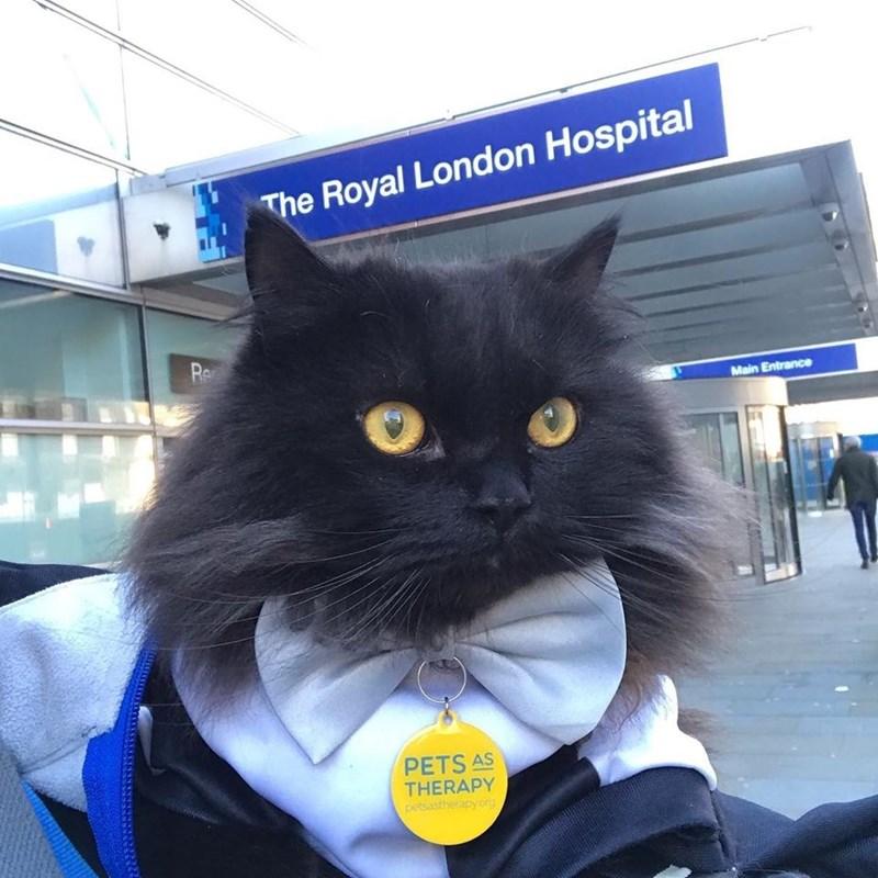 Cat - The Royal London Hospital Re Main Entrance PETS AS THERAPY petsastherapyorg