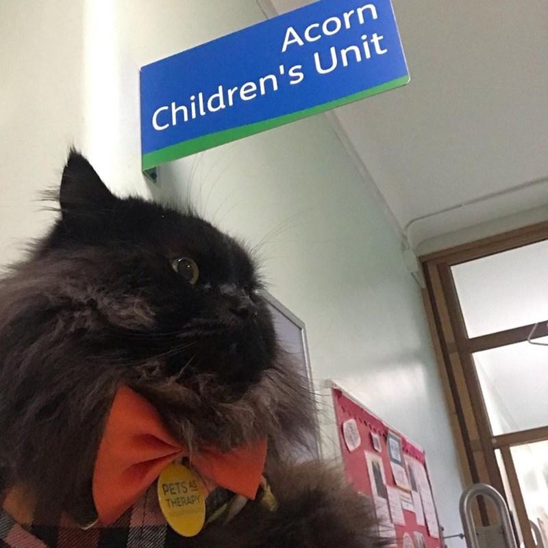 Cat - Acorn Children's Unit PETS 45 THERAPY