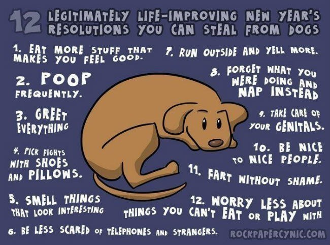 Text - LEGITIMATELY LIFE-IMPROVING NEN YEAR'S RESOLUTIONS you CAN STEAL FROM DOGS 12 1. EAT MORE STUFF THAT MAKES YOU FEEL GOOD. 7. RUN OUTSIDE AND YELL MORE. 8. FORGET WHAT YOU WERE DOING AND NAP INSTEAD 2. PoOP FREQUENTLY. 3. GREET EVERYTHING 9. TAKE CARE OF YOUR GENITALS. 10. BE NICE TO NICE PEOPLE. 11. FART WITHOUT SHAME. 4. PICK FIGHTS WITH SHOES AND PILLOWS. 5. SMELL THINGS THAT LOOK INTERESTING 12. WORRY LESS ABOUT THINGS YOU CAN'T EAT OR PLAY WITH 6. BE LESS SCARED OF TELEPHONES AND STRA