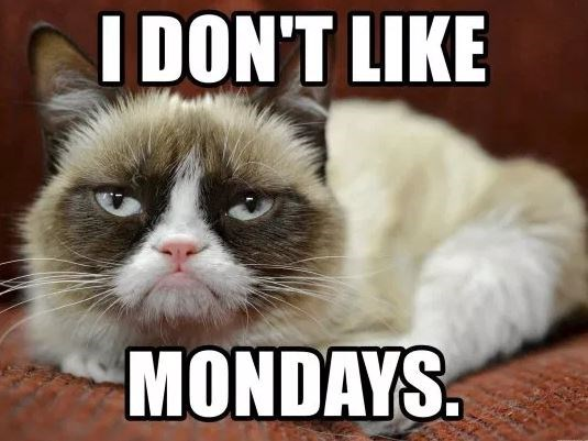 Cat - I DON'T LIKE MONDAYS.
