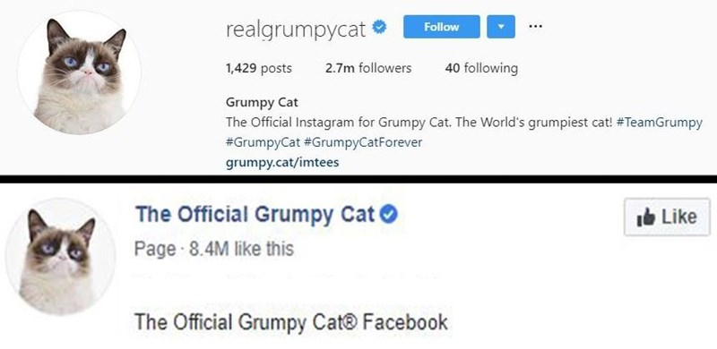 Text - realgrumpycat Follow ... 40 following 1,429 posts 2.7m followers Grumpy Cat The Official Instagram for Grumpy Cat. The World's grumpiest cat! #TeamGrumpy #GrumpyCat #GrumpyCatForever grumpy.cat/imtees The Official Grumpy Cat Ib Like Page 8.4M like this The Official Grumpy Cat® Facebook
