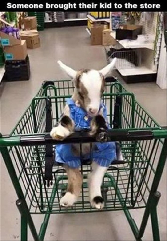 Canidae - Someone brought their kid to the store IN