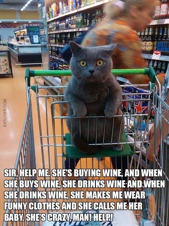 Cat - SIR, HELP ME. SHE'S BUYING WINE, AND WHEN SHE BUYS WINE, SHE DRINKS WINE AND WHEN SHE DRINKS WINE, SHE MAKES ME WEAR FUNNY CLOTHES AND SHE CALLS ME HER BABY. SHE'S CRAZY, MAN! HELP! EATLIVER.COM