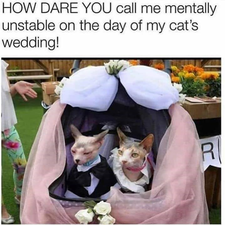 two hairless cats, one dressed as a bride and one as a groom, sitting in a cat carrier decorated with flowers and gauzy fabrics. caption that reads: how dare you call me mentally unstable on the day of my cats' wedding