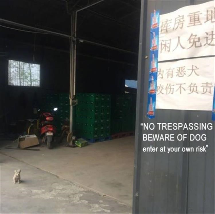 "entrance to some warehouse with a big sign that reads ""no trespassing beware of dog. enter at your own risk"". the dog is a tiny puppy sitting at the entrance"