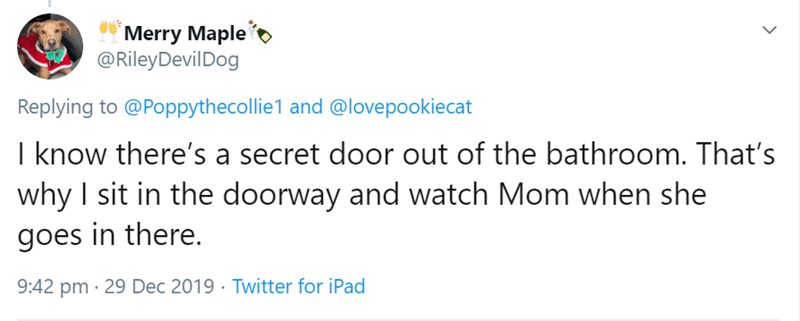 Text - Merry Maple @RileyDevilDog Replying to @Poppythecollie1 and @lovepookiecat I know there's a secret door out of the bathroom. That's why I sit in the doorway and watch Mom when she goes in there. 9:42 pm · 29 Dec 2019 · Twitter for iPad