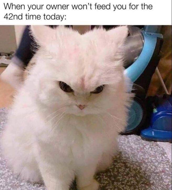 Cat - When your owner won't feed you for the 42nd time today: