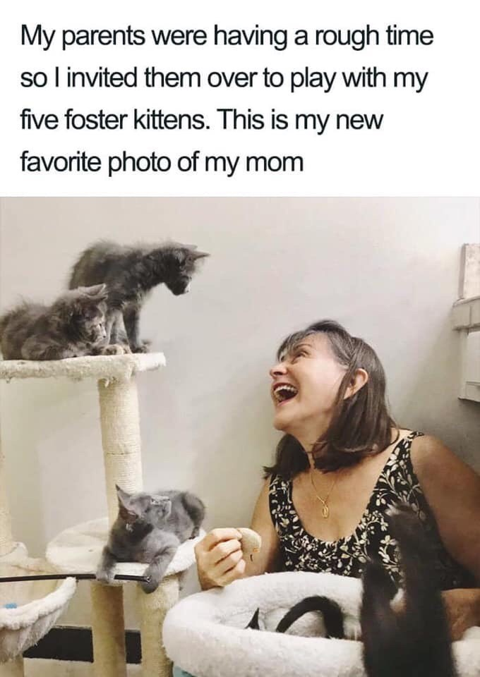 Cat - My parents were having a rough time so l invited them over to play with my five foster kittens. This is my new favorite photo of my mom