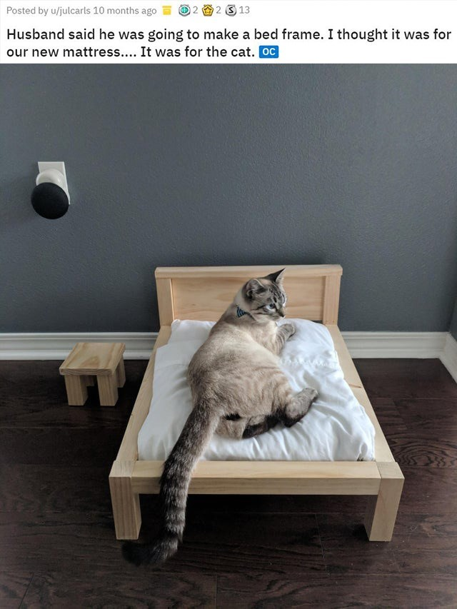 Cat - 2 3 13 Posted by u/julcarls 10 months ago Husband said he was going to make a bed frame. I thought it was for our new mattress.... It was for the cat. Oc