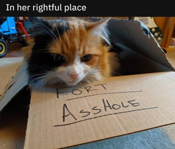 Cat - In her rightful place AssHoLE