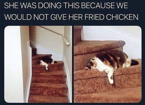 Cat - SHE WAS DOING THIS BECAUSE WE WOULD NOT GIVE HER FRIED CHICKEN