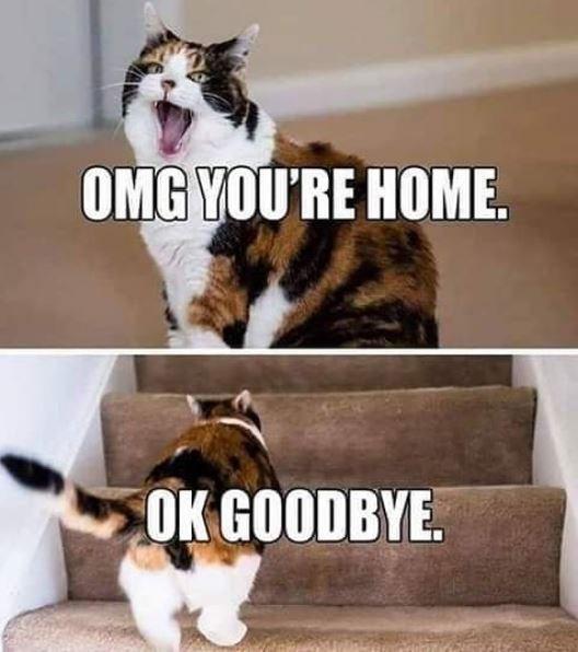 Cat - OMG YOU'RE HOME. OK GOODBYE.