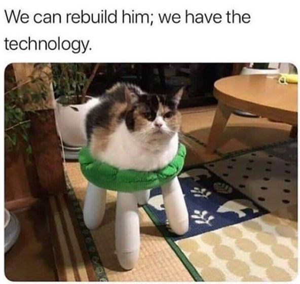Cat - We can rebuild him; we have the technology.