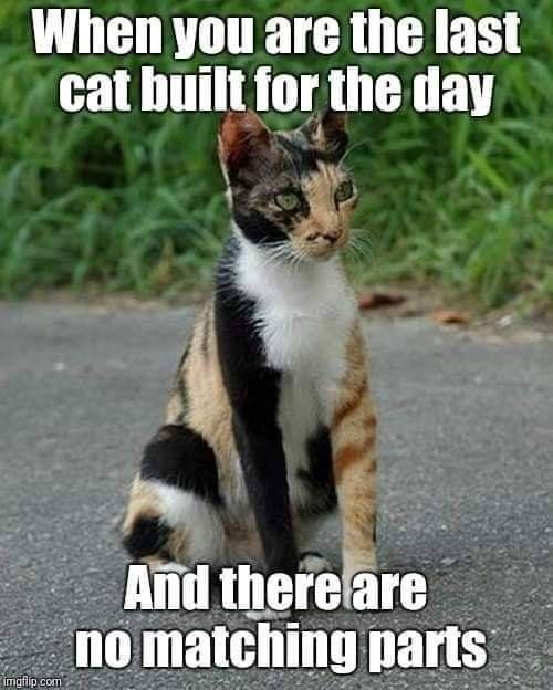 Photo caption - When you are the last cat built for the day And there are no matching parts imafip com