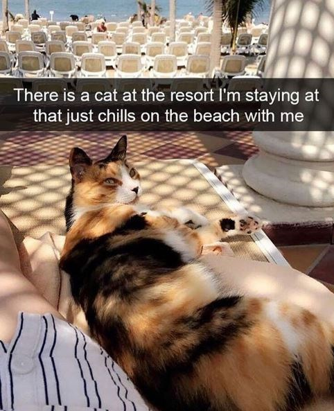Cat - There is a cat at the resort l'm staying at that just chills on the beach with me