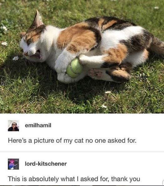 Cat - emilhamil Here's a picture of my cat no one asked for. lord-kitschener This is absolutely what I asked for, thank you