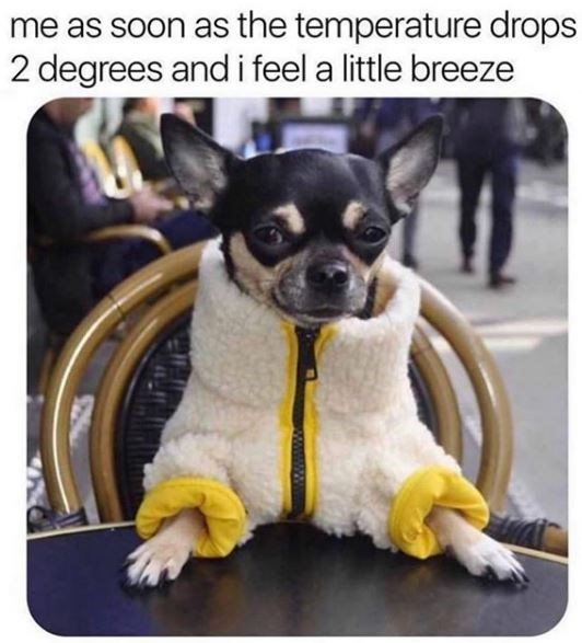 Dog - me as soon as the temperature drops 2 degrees and i feel a little breeze
