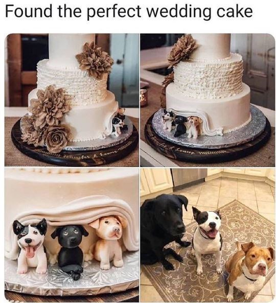Canidae - Found the perfect wedding cake wwwsececce