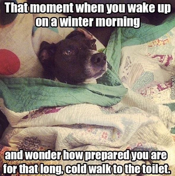 Canidae - That moment when you wake up on a winter morning and wonder how prepared you are for that long, cold walk to the toilet, @barkpost