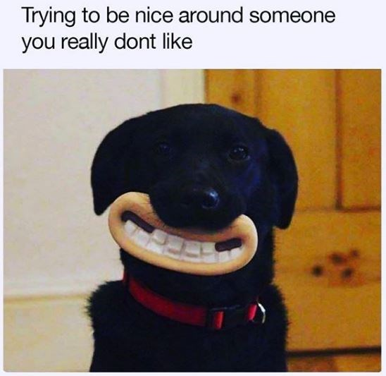 Dog - Trying to be nice around someone you really dont like