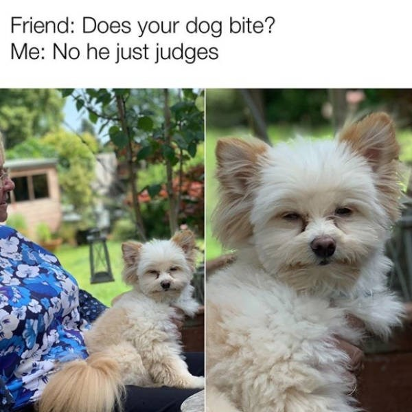 Dog breed - Friend: Does your dog bite? Me: No he just judges
