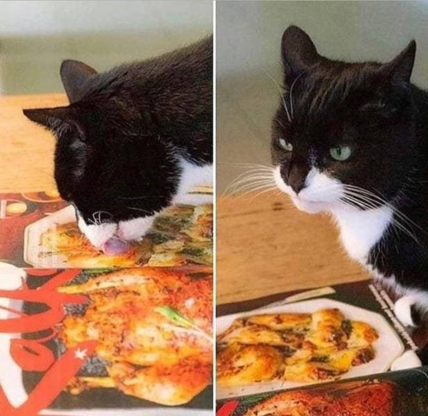 two pics showing a black and white cat licking a photo of a meal and then looking up with a displeased expression