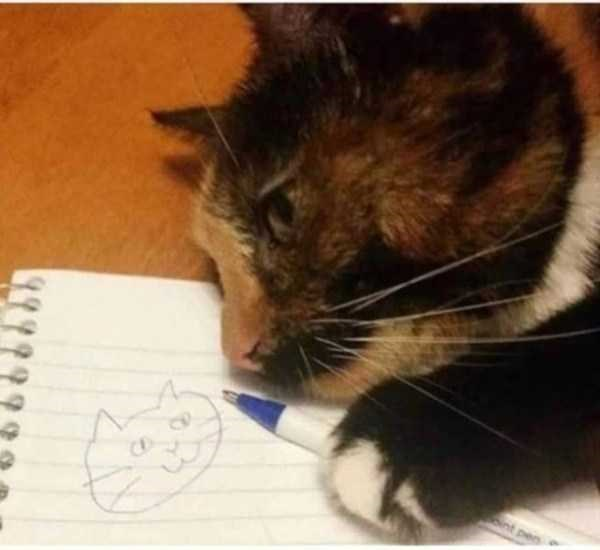 Cat - C. Bint per