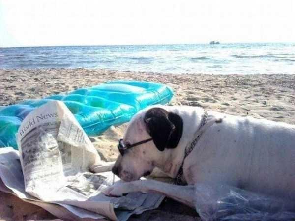 Dog - orld News