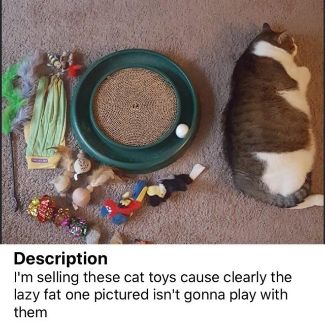 photo of a fat cat lying on its side facing away from a variety of cat toys: i'm selling these cat toys because clearly the lazy one pictured isn't gonna play with them
