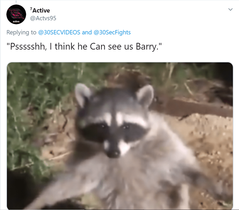 """Procyonidae - 7Active @Actvs95 active Replying to @30SECVIDEOS and @30SecFights """"Pssssshh, I think he Can see us Barry."""""""