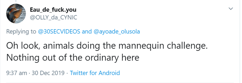 Text - Eau_de_fuck.you @OLLY_da_CYNIC Replying to @3OSECVIDEOS and @ayoade_olusola Oh look, animals doing the mannequin challenge. Nothing out of the ordinary here 9:37 am · 30 Dec 2019 · Twitter for Android