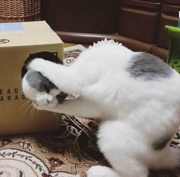 Cat - EAU ARAG