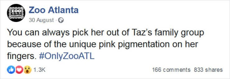 Text - 200 Zoo Atlanta 30 August - O You can always pick her out of Taz's family group because of the unique pink pigmentation on her fingers. #OnlyZo0ATL 1.3K 166 comments 833 shares