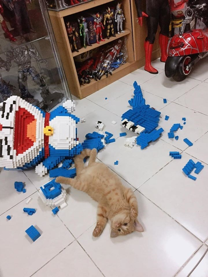 Cat - STRANGE