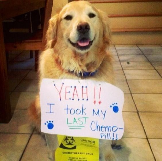 Dog - YEAH|| I took MY LAST Chemo- Pill!! CAUTION CHEMOTHERAFY DRUG PRELAUTIONs